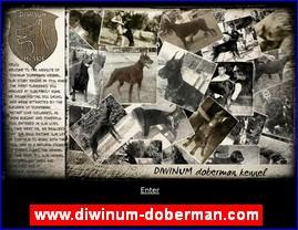 www.diwinum-doberman.com
