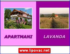 www.lipovac.net