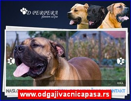www.odgajivacnicapasa.rs